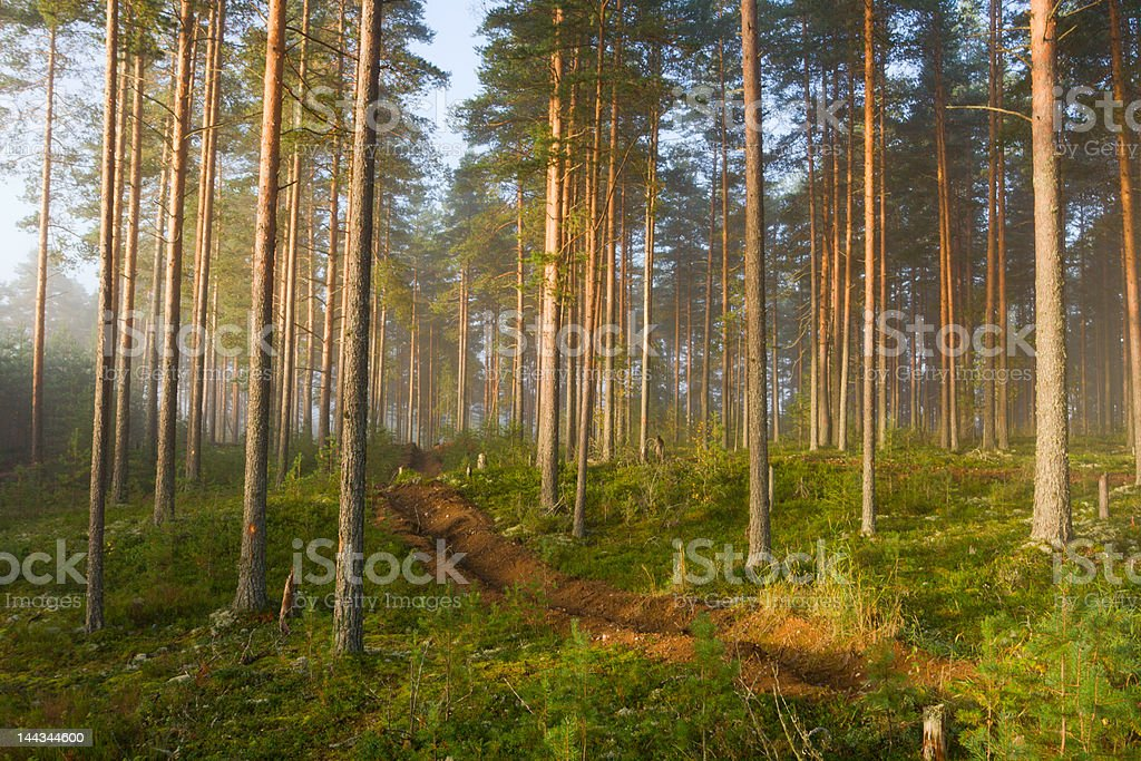 fog in wood stock photo