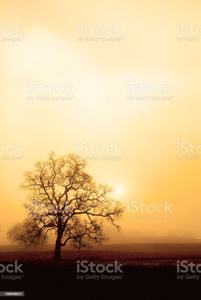Fog, Oak and Sun in Sepia royalty-free stock photo