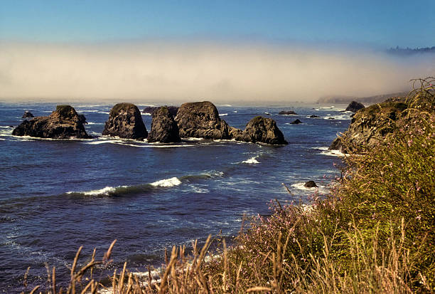 Fog off Northern California coast Wild grasses on a bluff overlooking the Pacific Ocean in Northern California. A distinct fogbank is visible in the distance. hearkencreative stock pictures, royalty-free photos & images