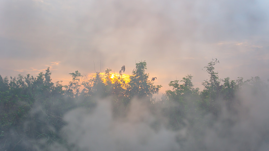 fog or smog on morning and forest and sun on background