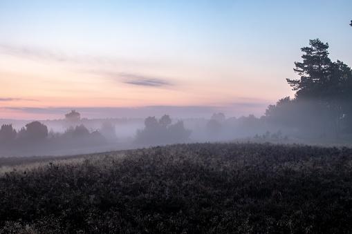 Fog over beautiful flowering heath landscape at sunrise
