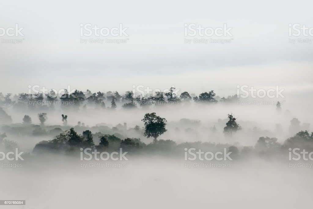 Fog over the forest, Black and white tones in minimalist photography stock photo