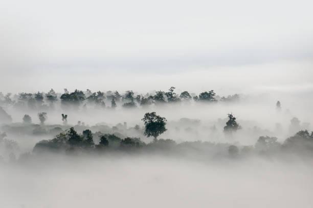 Brouillard sur la forêt, tons noirs et blancs dans la photographie minimaliste - Photo