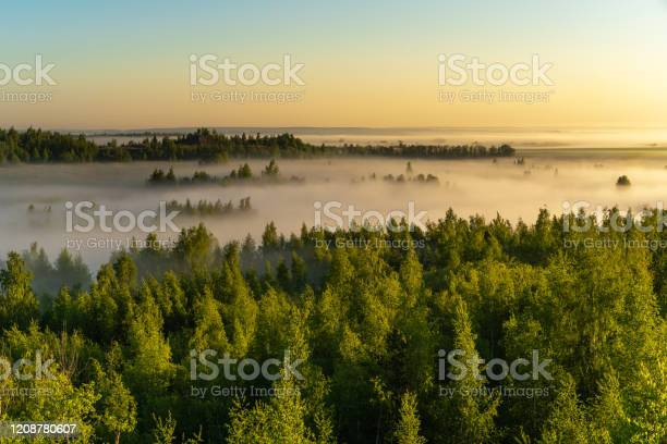 Photo of Fog over the forest