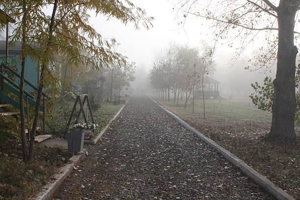 Fog – Foto