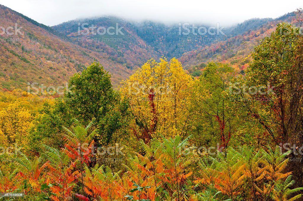 Fog, snow, and fall colors in The Great Smoky Mountains. stock photo