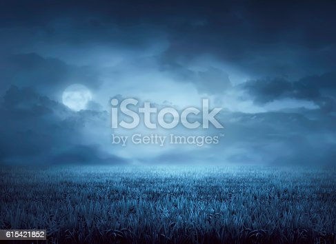 Fog surrounds meadow at night in the moonlight