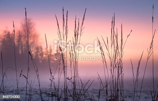 istock Foggy and colorful sunset with foreground grass at winter evening 843724300