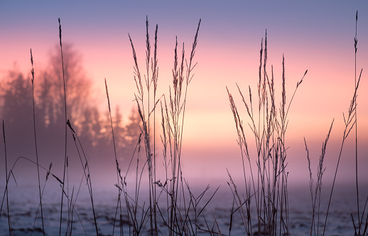 Foggy and colorful sunset with foreground grass at winter evening