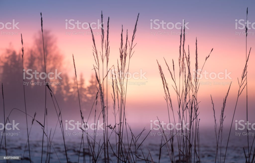Foggy and colorful sunset with foreground grass at winter evening stock photo