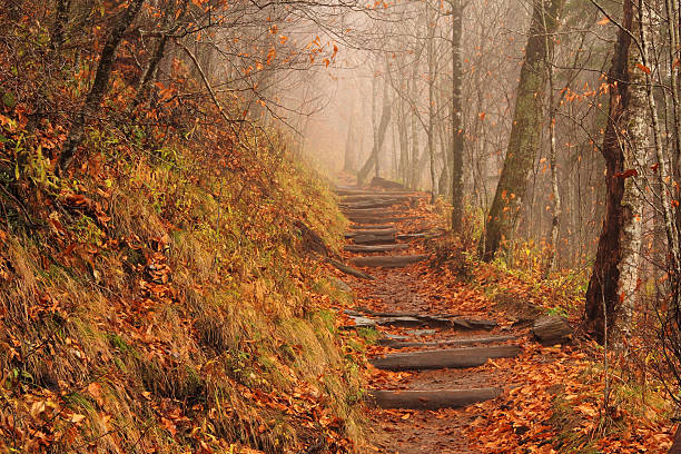 Foggy Appalachian Trail Appalachian Trail on a foggy and rainy fall afternoon, Newfound Gap, Great Smokey Mountains National Park appalachian trail stock pictures, royalty-free photos & images