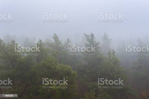 Photo of Foggy Autumn colorful Deciduous Forest. Dense forest early in the morning