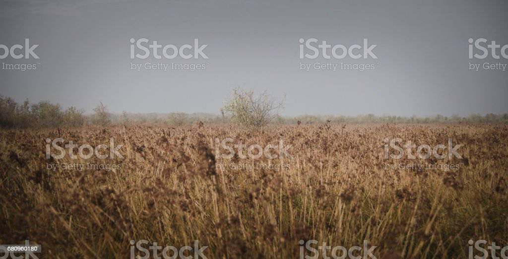 Foggy Autumn Landscape on the Field royalty-free stock photo