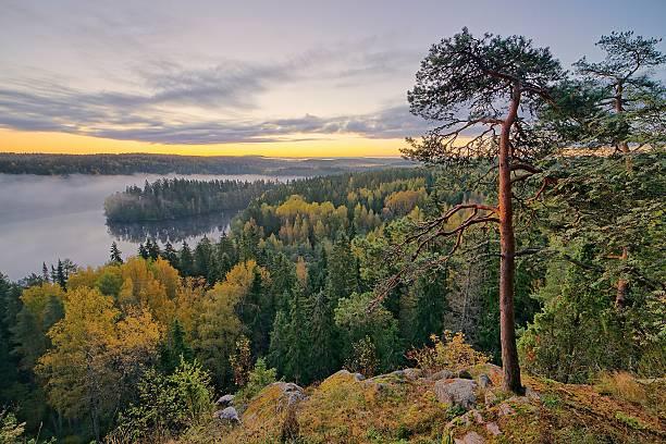 Foggy autumn landscape stock photo