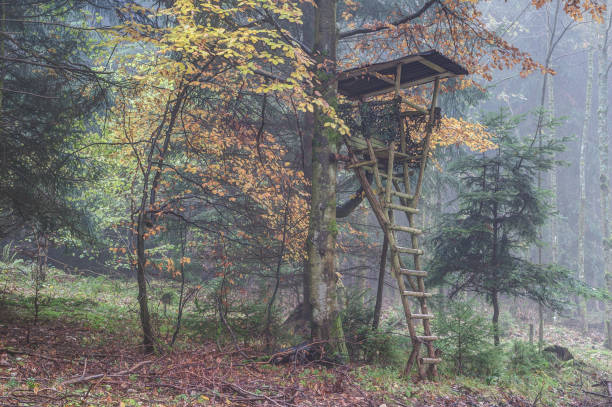 A foggy autumn morning in the hunting area stock photo