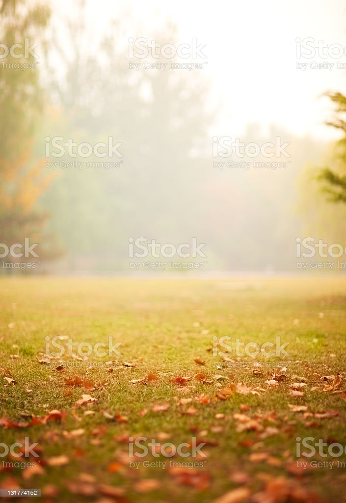 Foggy autumn royalty-free stock photo