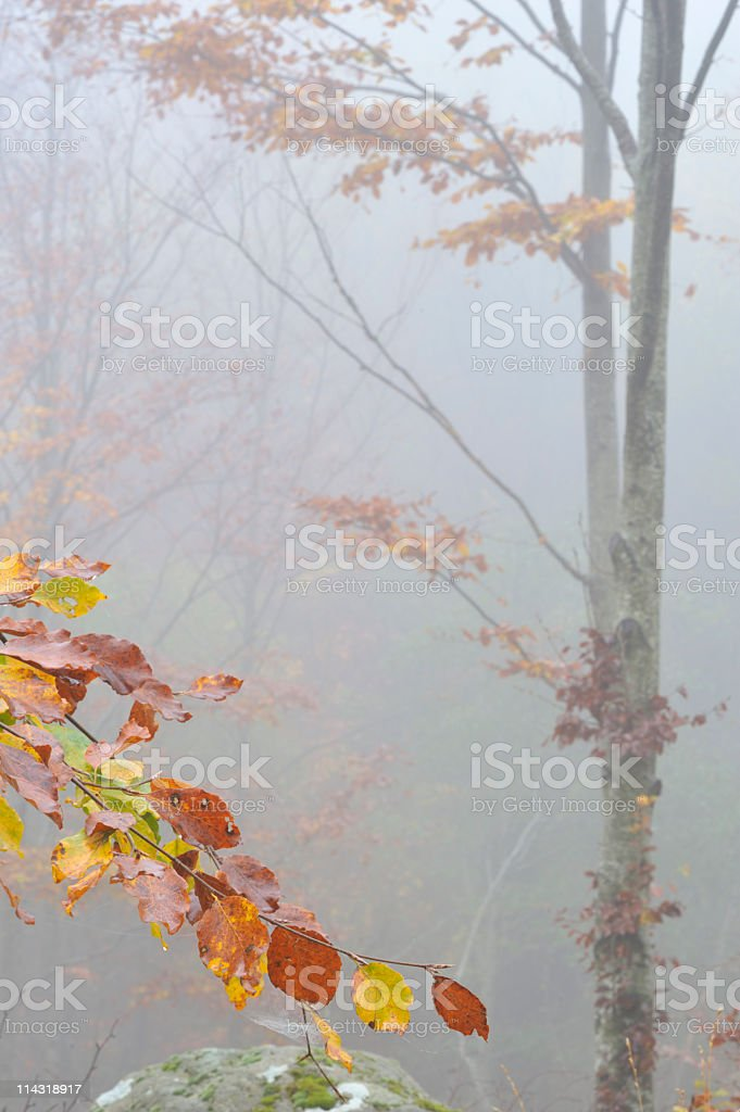 Foggy Autumn Vertical Background royalty-free stock photo