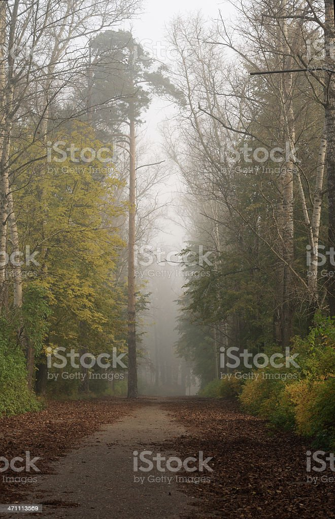 Foggy avenue in the autumn royalty-free stock photo