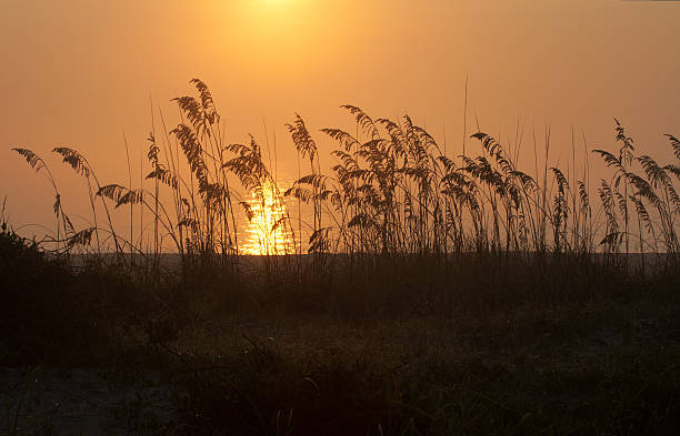 Foggy Beach Sunrise with Sea Oats stock photo
