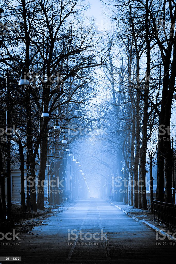 Foggy boulevard royalty-free stock photo