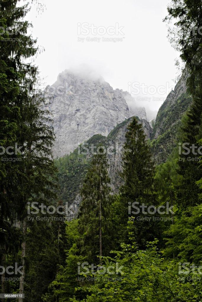 foggy clouds rising from dark alpine mountain forest - Zbiór zdjęć royalty-free (Alpy)