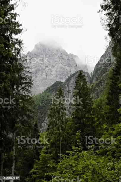 Mgliste Chmury Wznoszące Się Z Ciemnego Alpejskiego Lasu Górskiego - zdjęcia stockowe i więcej obrazów Alpy
