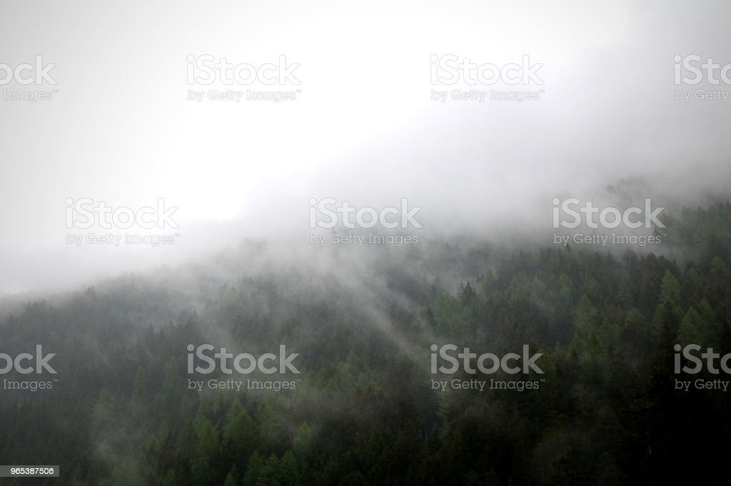 foggy clouds rising from dark alpine mountain forest zbiór zdjęć royalty-free