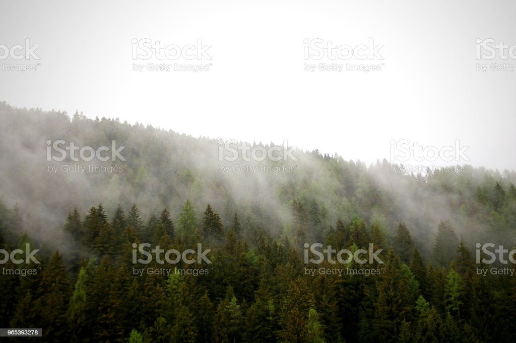 nuages brumeux passant de forêt sombre montagne alpine - Photo de Abrupt libre de droits