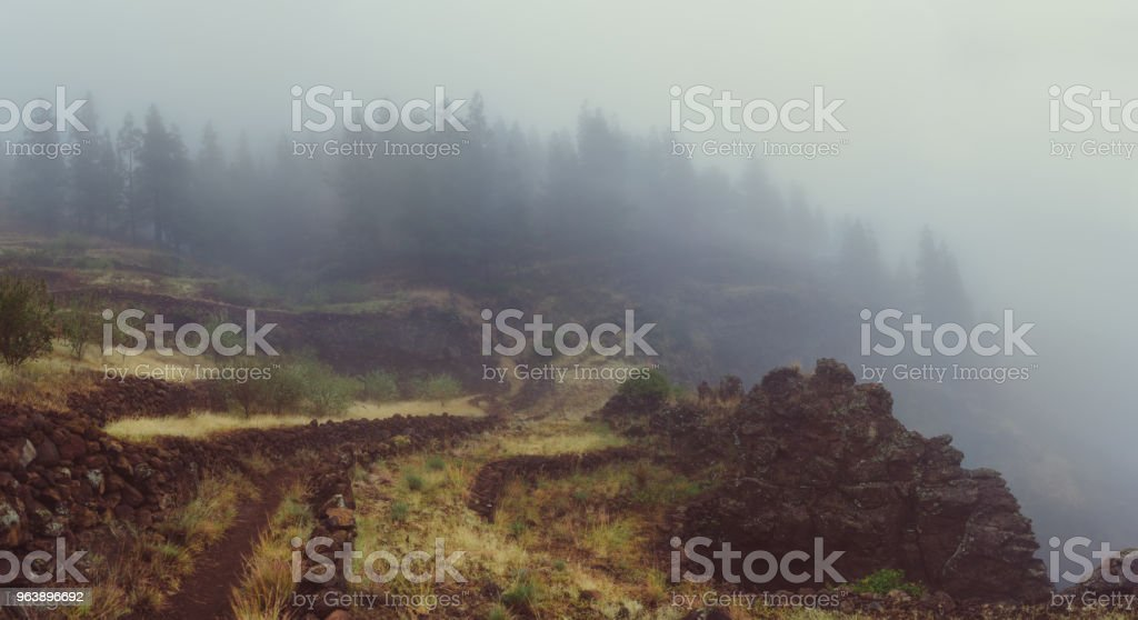 Foggy cobbled road among agricultural terraces towards mysterious pine forest. Rainy and misty weather near Cova crater on Santo Antao Island, Cape Verde - Royalty-free Adventure Stock Photo
