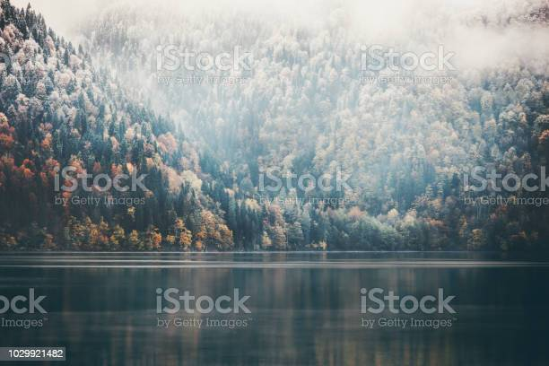 Foggy coniferous forest and lake wild landscape travel serene scenic picture id1029921482?b=1&k=6&m=1029921482&s=612x612&h=elsfmwepg6nxboz1jprlq svfdumwc9yfhhcyc7oqiq=