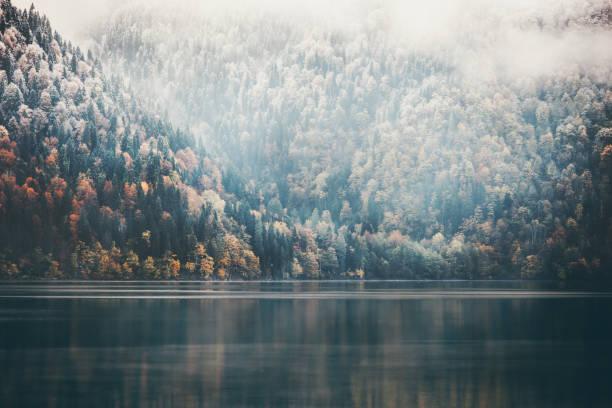 Foggy Nadel-Wald und See wilder Landschaft Reisen heiteren Blick – Foto