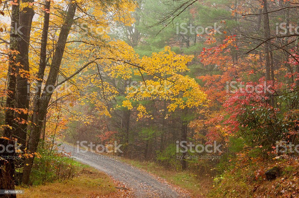 Foggy country road on a fall day. stock photo