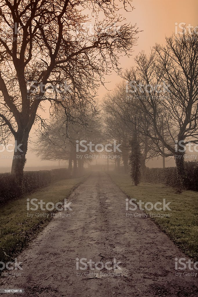 Foggy Country Road royalty-free stock photo