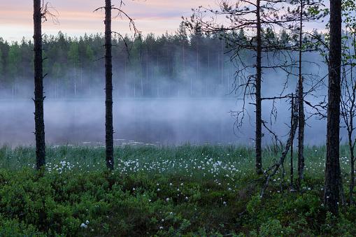 Foggy dawn at forest pond