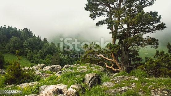 Green trees growing on stony and grassy ground against thick mist in mountainous terrain