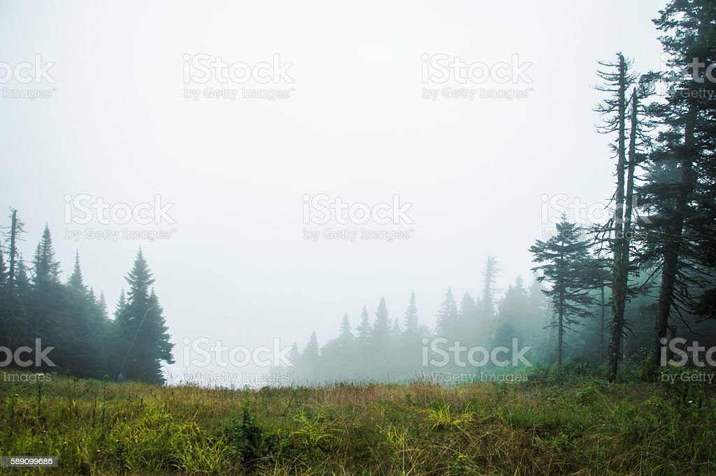 Foggy day in Mont Tremblant National Park stock photo