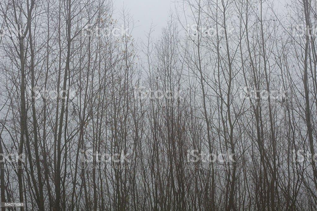 Foggy Day stock photo