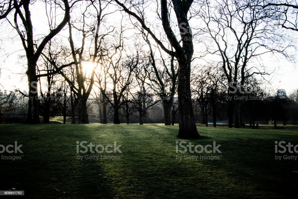 A foggy early morning in a London park, with the sun casting shadows through the trees. stock photo