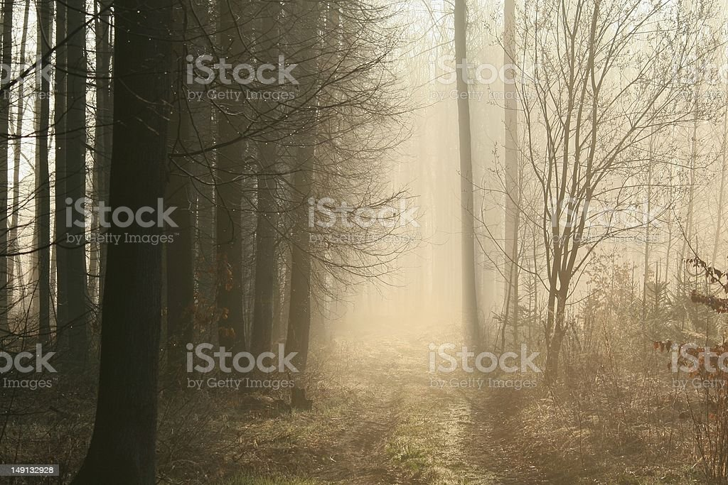 Foggy early spring morning in the woods royalty-free stock photo