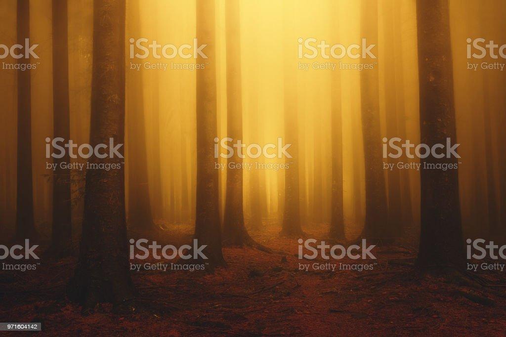 bosque de ensueño brumoso de la fantasía con sol en la mañana de otoño - foto de stock