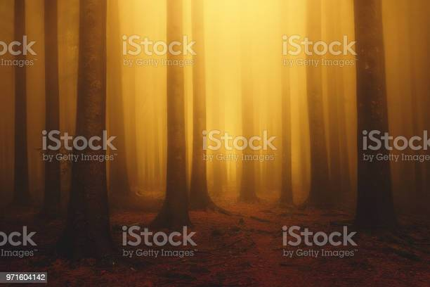 Photo of foggy fantasy dreamy forest with sunshine at morning in autumn