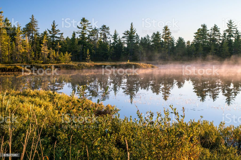Foggy Forest And Pond In Michigan At Sunrise In Tahquamenon Falls State Park stock photo