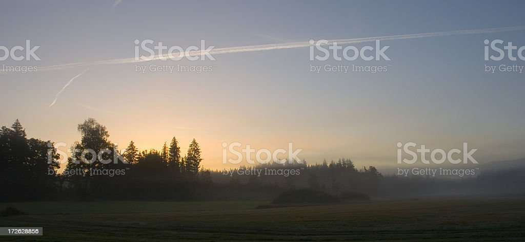 Foggy forest at twilight royalty-free stock photo