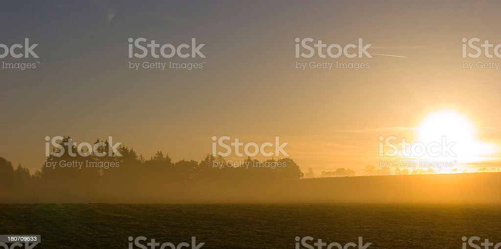 Foggy forest at twilight stock photo