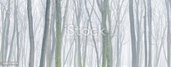 Panoramic background of snowy forest at foggy winter day.