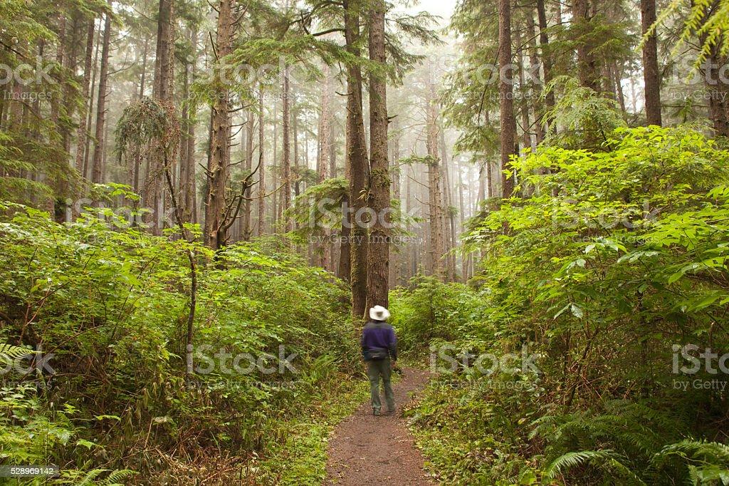 Foggy forest hiker on Olympic National Park trail Washington stock photo