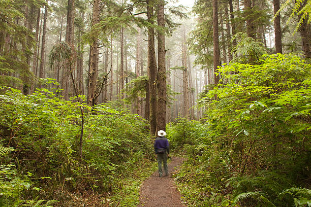 Foggy forest hiker on Olympic National Park trail Washington stock photo