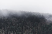 Foggy trees in a dense forest hill in the Columbia River Gorge, Oregon, Pacific Northwest