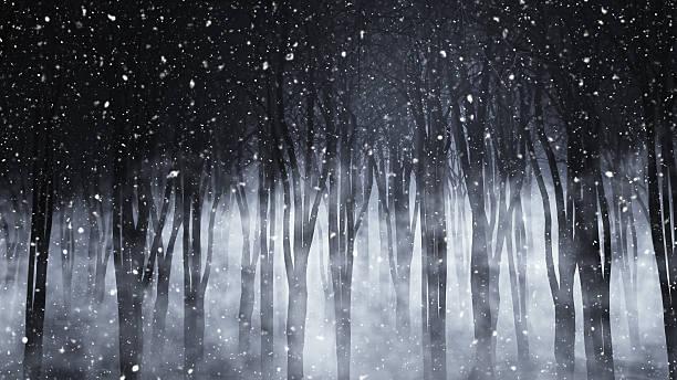 3 d nebligen wald auf einer verschneiten nacht - waldfriedhof stock-fotos und bilder