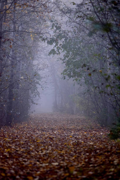 Foggy forest path stock photo